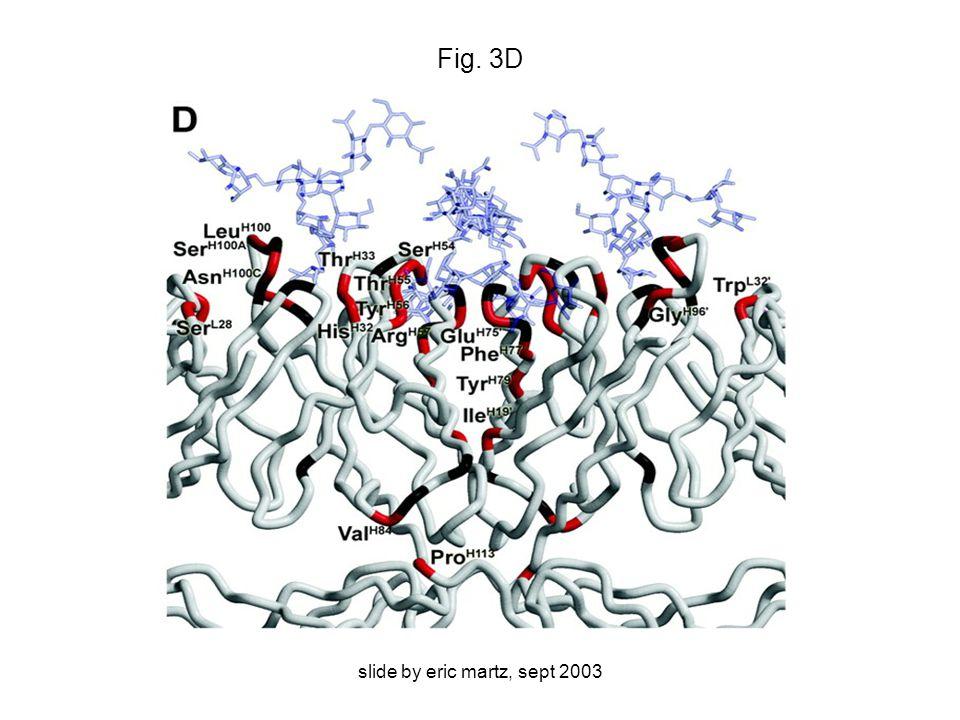 slide by eric martz, sept 2003 Fig. 3D