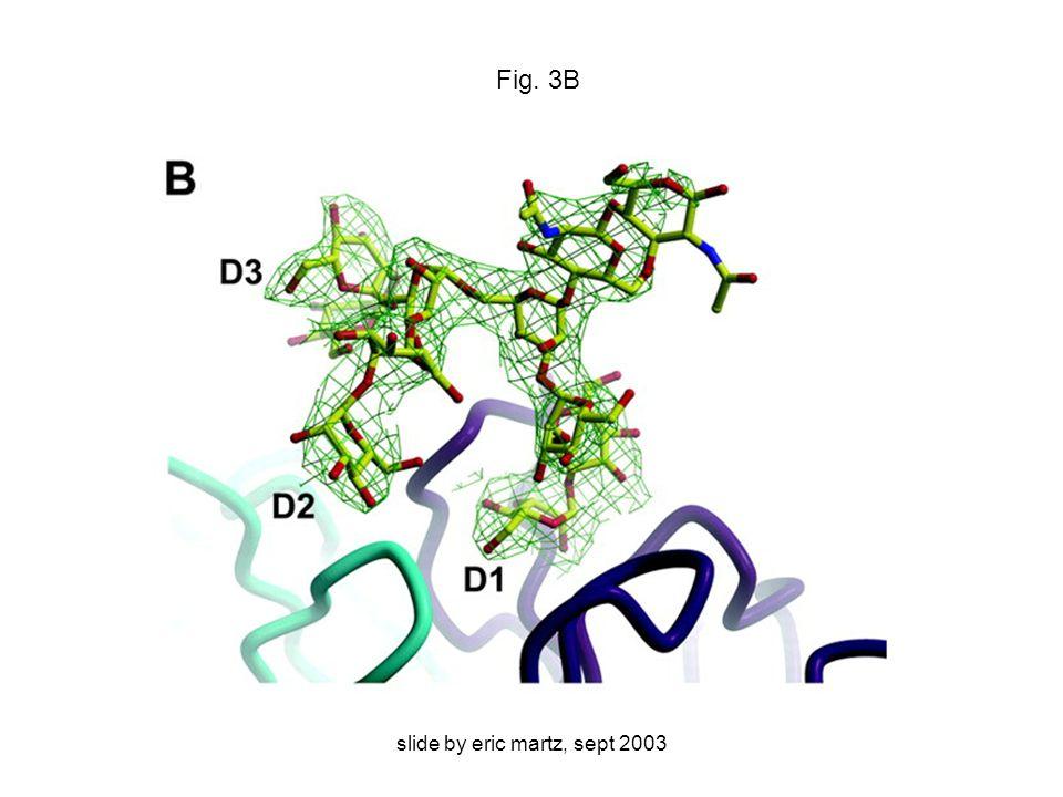 slide by eric martz, sept 2003 Fig. 3B
