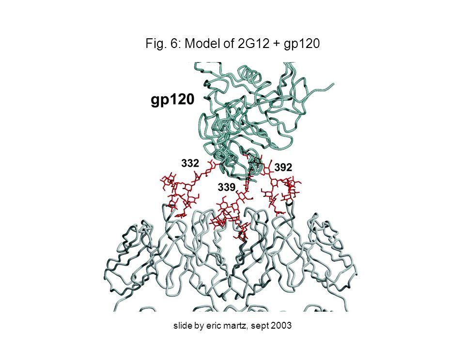 slide by eric martz, sept 2003 Fig. 6: Model of 2G12 + gp120