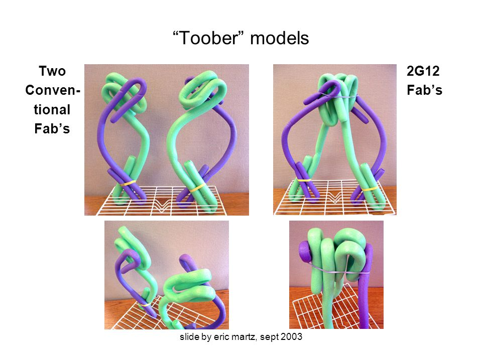 slide by eric martz, sept 2003 Toober models Two Conven- tional Fab's 2G12 Fab's