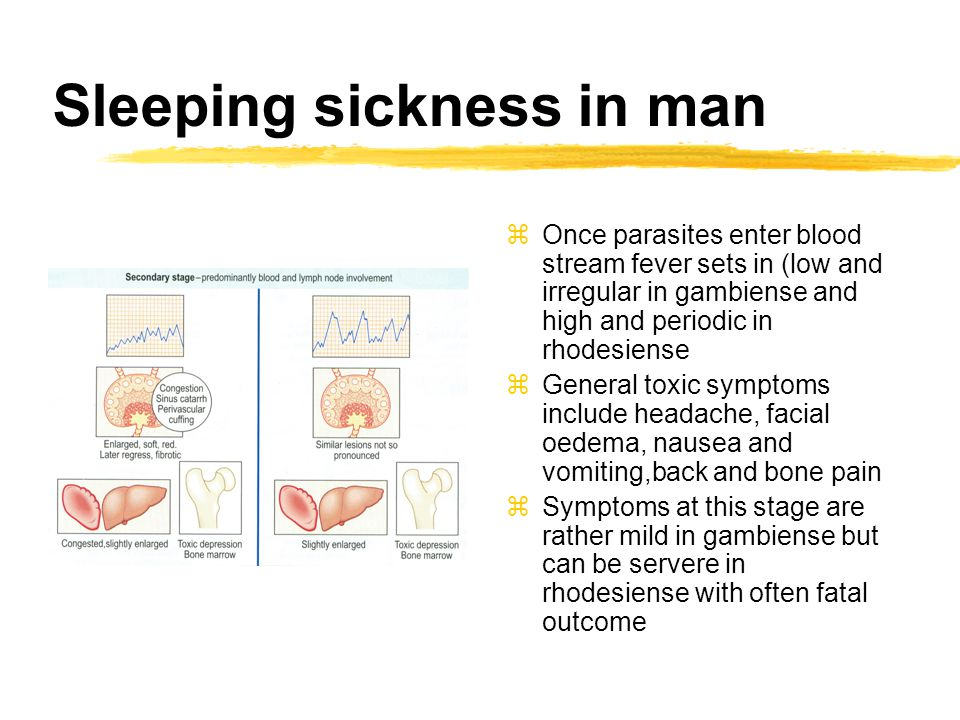 Sleeping sickness in man zOnce parasites enter blood stream fever sets in (low and irregular in gambiense and high and periodic in rhodesiense zGeneral toxic symptoms include headache, facial oedema, nausea and vomiting,back and bone pain zSymptoms at this stage are rather mild in gambiense but can be servere in rhodesiense with often fatal outcome