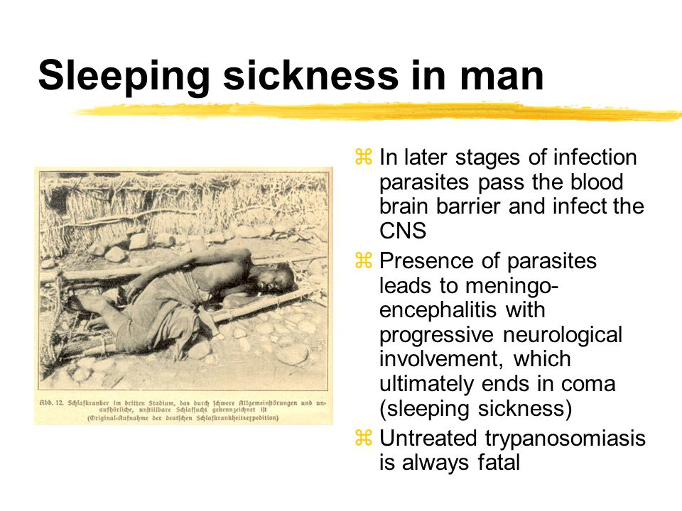 Sleeping sickness in man zIn later stages of infection parasites pass the blood brain barrier and infect the CNS zPresence of parasites leads to menin