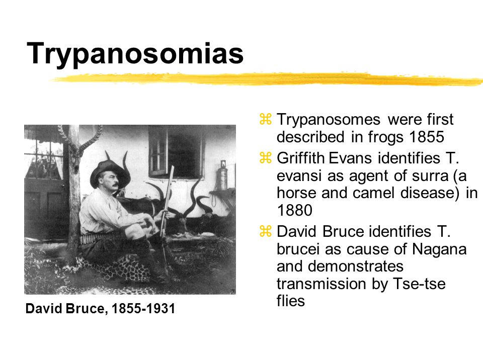 Trypanosomias zTrypanosomes were first described in frogs 1855 zGriffith Evans identifies T. evansi as agent of surra (a horse and camel disease) in 1