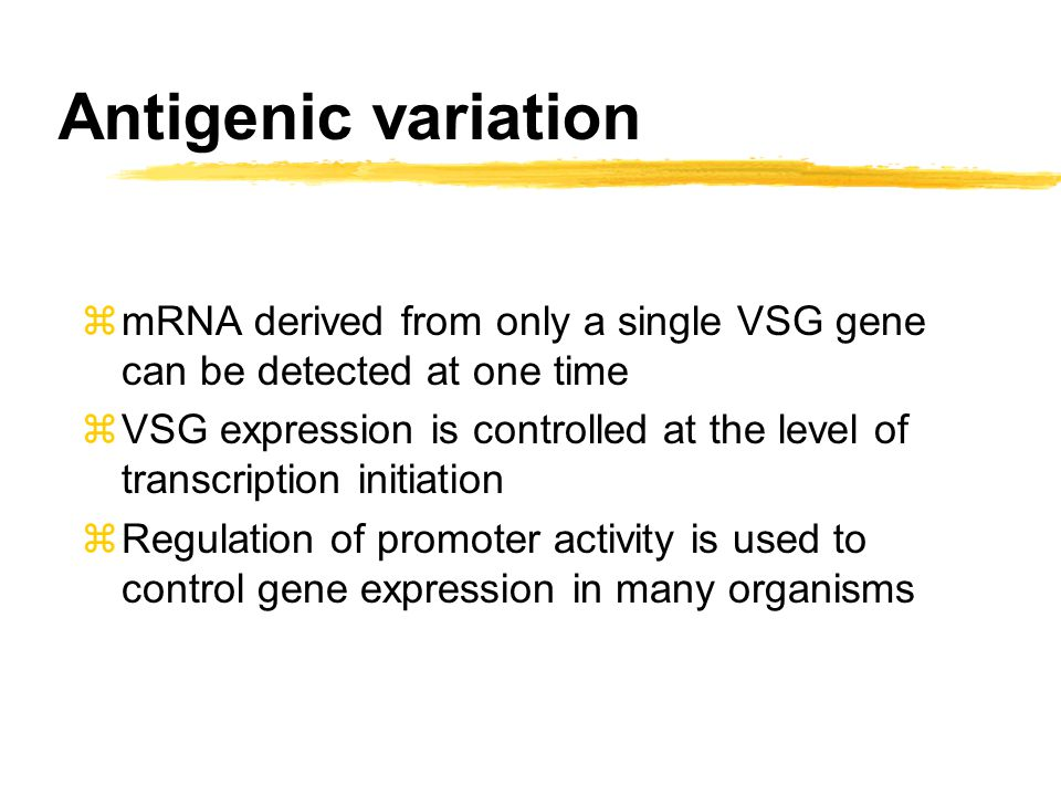 Transcription in trypanosomes is polycistronic zBut, only very few promoters have been identified in trypanosomes and they did not seem to regulate the expression of VSG zAlso surprisingly transcription in trypanosomes was found to be polycistronic zPolycistronic means that a number of genes are transcribed at the same time into one long messenger RNA zIn bacteria this message is translated into protein, in trypanosomes further processing is needed