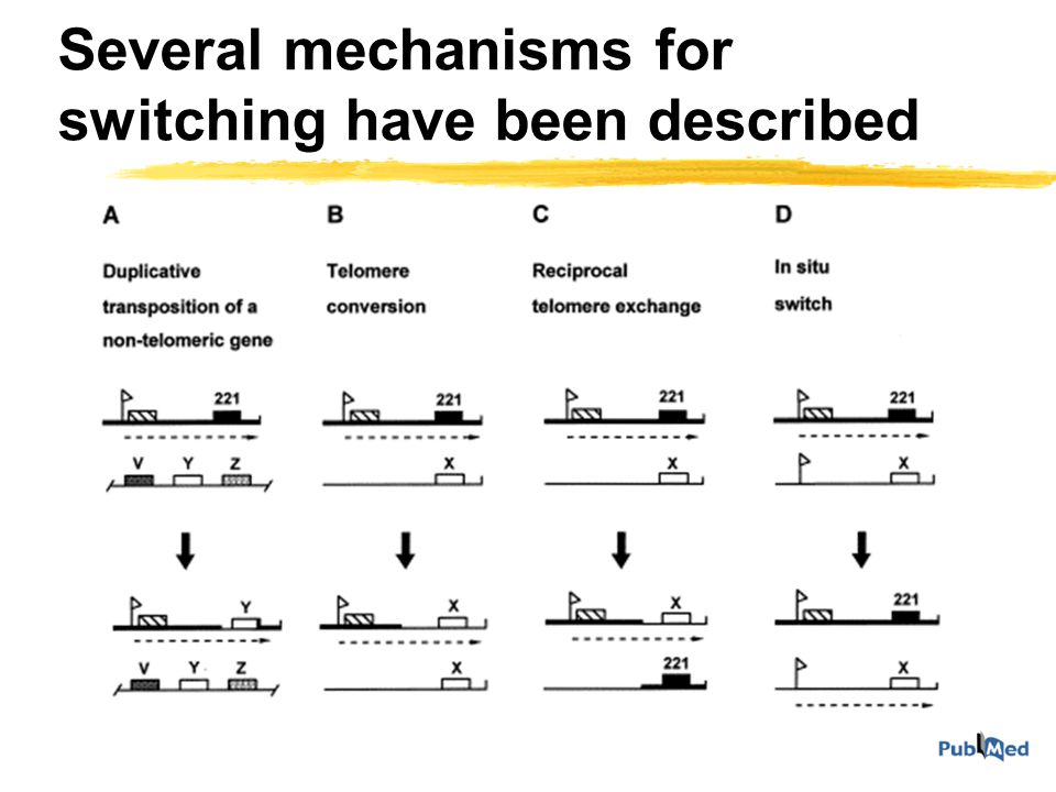 Antigenic variation zTransposition of VSG genes occurs by intra- or intermolecular recombination zThis explains switching but not really why one gene is active and all the others are silent