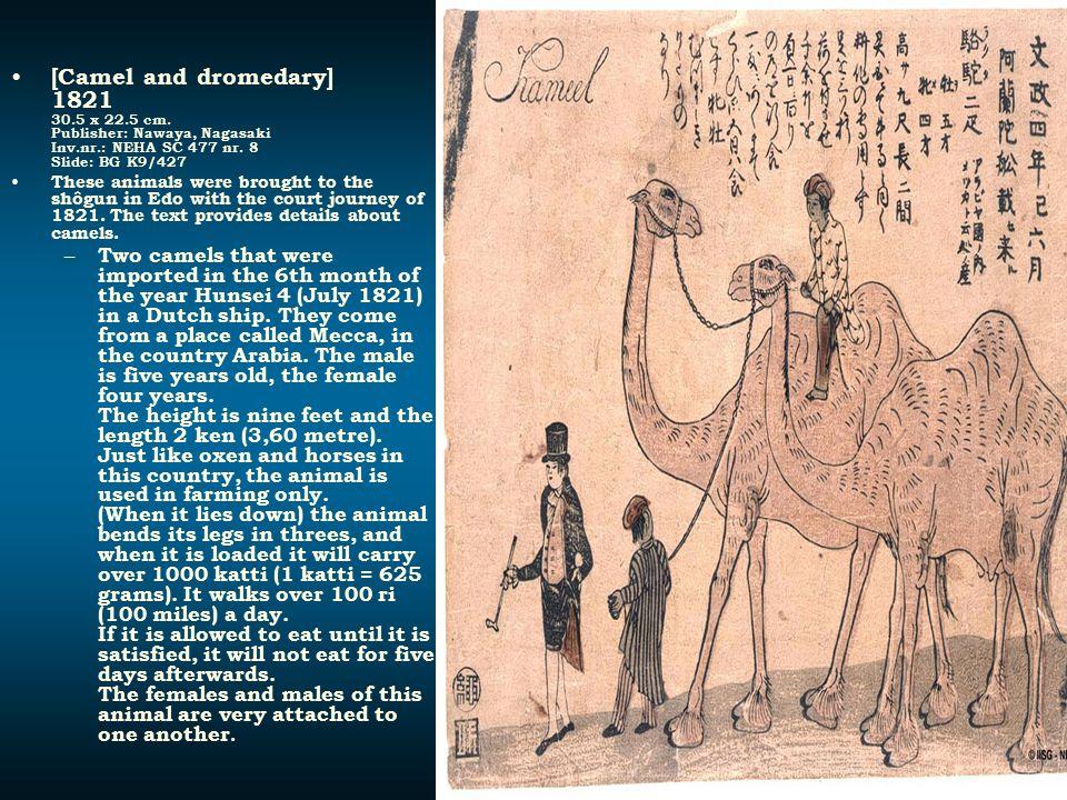 [Camel and dromedary] 1821 30.5 x 22.5 cm. Publisher: Nawaya, Nagasaki Inv.nr.: NEHA SC 477 nr. 8 Slide: BG K9/427 These animals were brought to the s