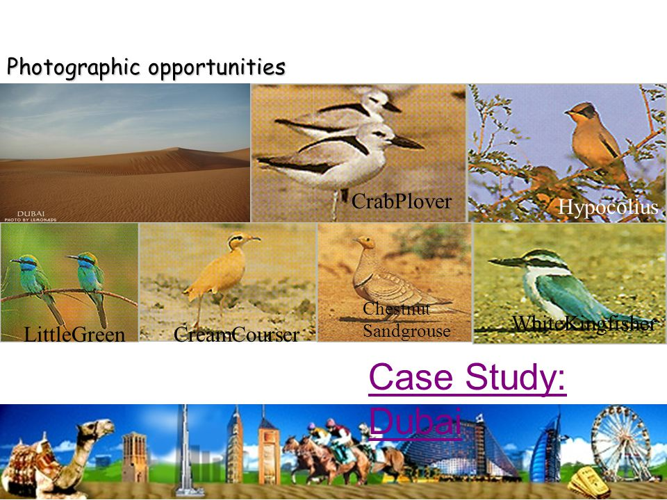 Photographic opportunities CrabPlover CreamCourserLittleGreen WhiteKingfisher Hypocolius Chestnut Sandgrouse