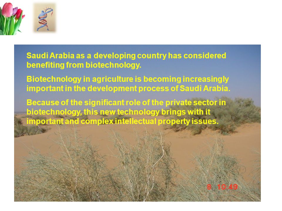 The current Status Applications Bio Centers  Training and Research  Development of 2 tissue culture protocols for date palms  Field trials of tissue culture date palms.