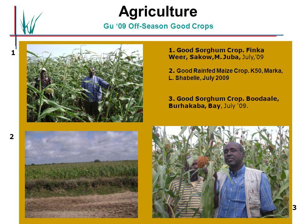 Agriculture Gu '09 Off-Season Good Crops 1. Good Sorghum Crop. Finka Weer, Sakow,M. Juba, July,'09 2. Good Rainfed Maize Crop. K50, Marka, L. Shabelle