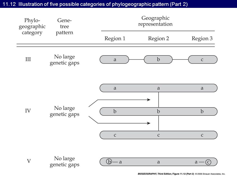 11.12 Illustration of five possible categories of phylogeographic pattern (Part 2)