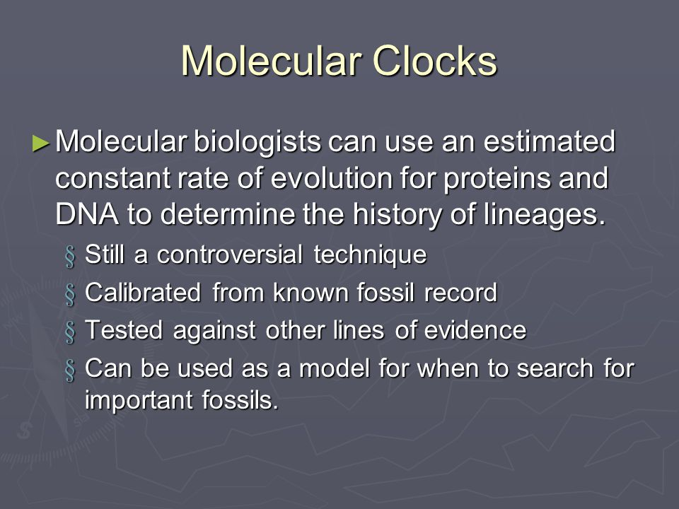 Molecular Clocks ► Molecular biologists can use an estimated constant rate of evolution for proteins and DNA to determine the history of lineages.