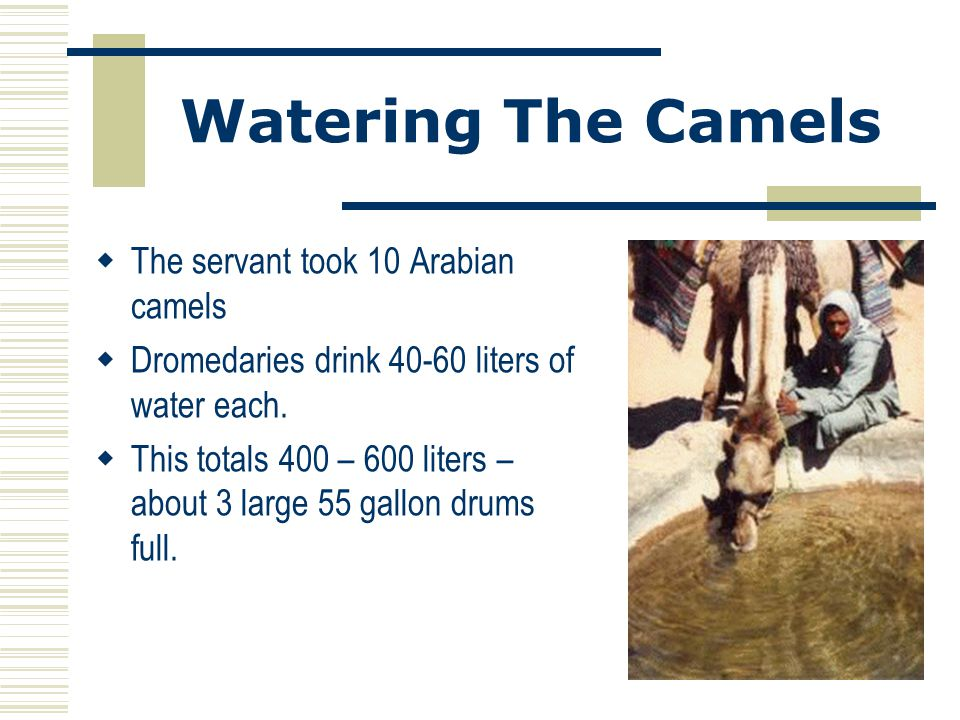 Watering The Camels  The servant took 10 Arabian camels  Dromedaries drink 40-60 liters of water each.  This totals 400 – 600 liters – about 3 larg