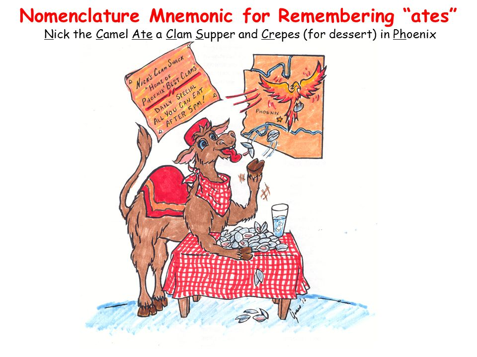 """Nomenclature Mnemonic for Remembering """"ates"""" Nick the Camel Ate a Clam Supper and Crepes (for dessert) in Phoenix"""
