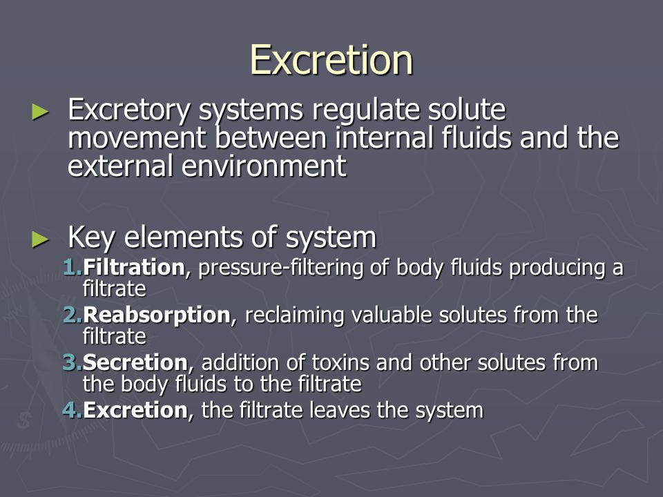 Excretion ► Excretory systems regulate solute movement between internal fluids and the external environment ► Key elements of system 1.Filtration, pressure-filtering of body fluids producing a filtrate 2.Reabsorption, reclaiming valuable solutes from the filtrate 3.Secretion, addition of toxins and other solutes from the body fluids to the filtrate 4.Excretion, the filtrate leaves the system