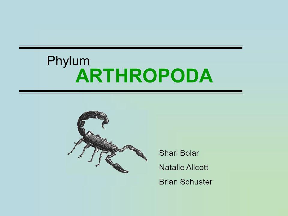 ARTHROPODA Phylum Shari Bolar Natalie Allcott Brian Schuster