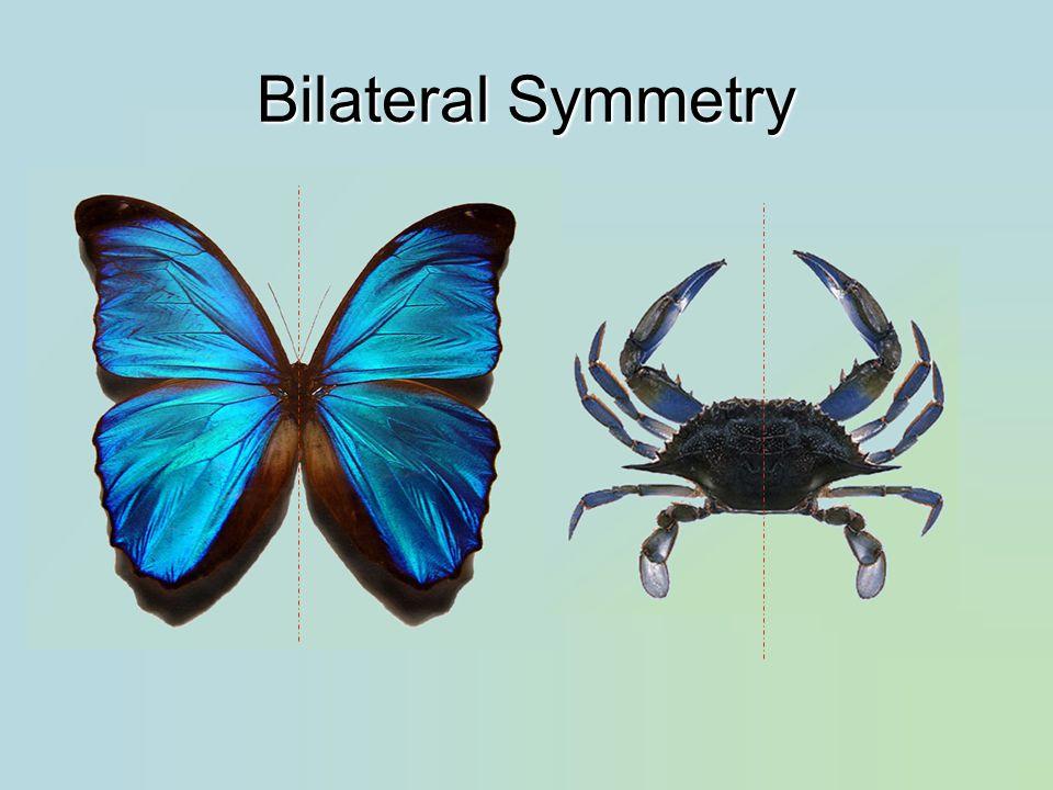 Major Classes Arachnida: spiders, scorpions, ticks, mites Diplopoda: millipedes Chilopoda: centipedes Insecta: insects Crustacea: crabs, lobsters, crayfish, shrimp, barnacles