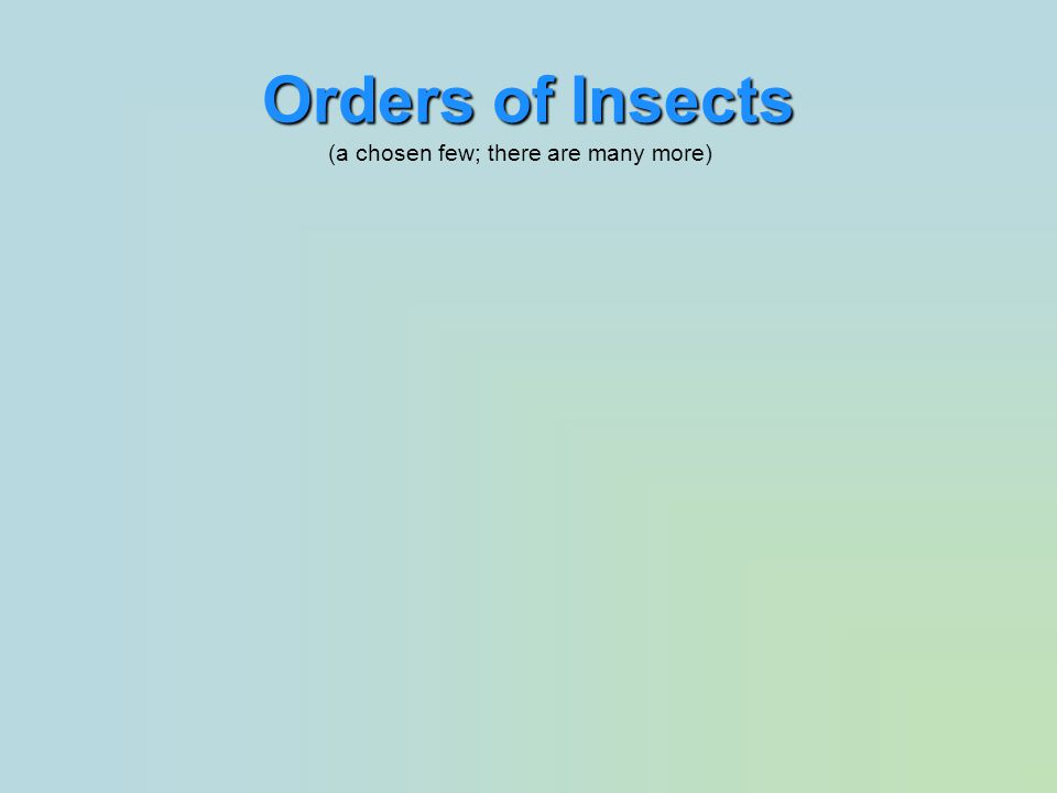 Orders of Insects (a chosen few; there are many more)