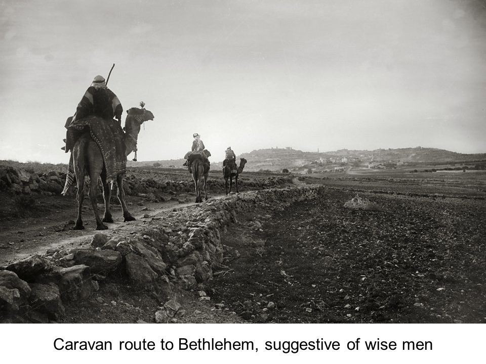 Shepherds Fields, flock with Bethlehem in distance