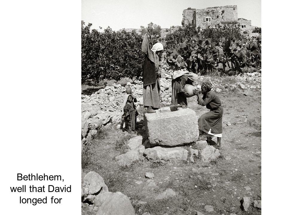 Bethlehem from southwest with sheep