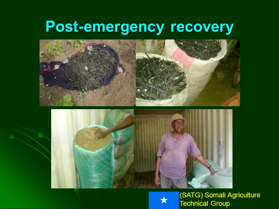 (SATG) Somali Agriculture Technical Group Post-emergency recovery 110 kg Filsan seed repatriated To Somalia and distributed to farmers by SAGRA