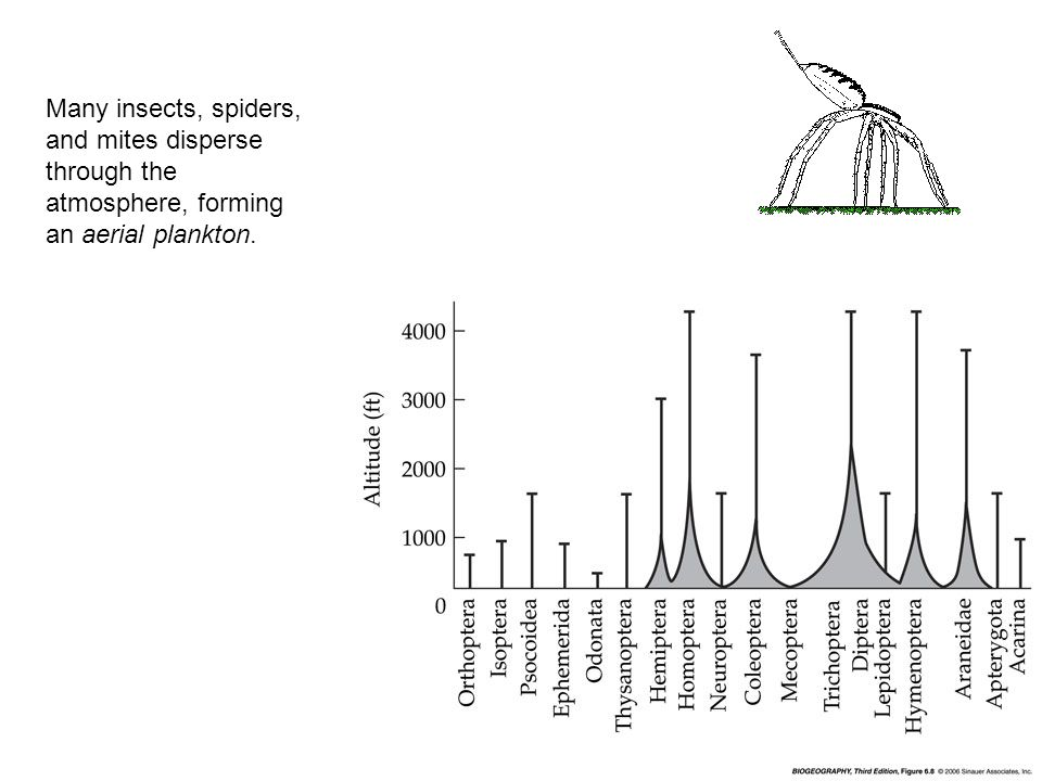 Many insects, spiders, and mites disperse through the atmosphere, forming an aerial plankton.