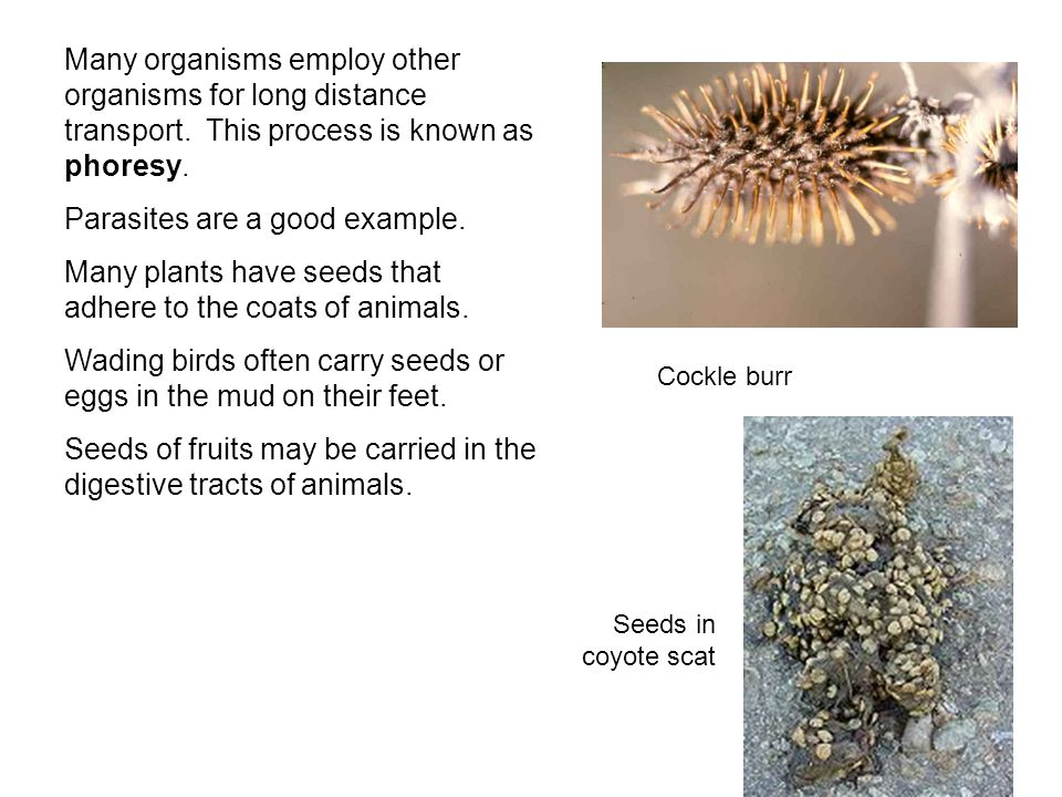 Many organisms employ other organisms for long distance transport. This process is known as phoresy. Parasites are a good example. Many plants have se