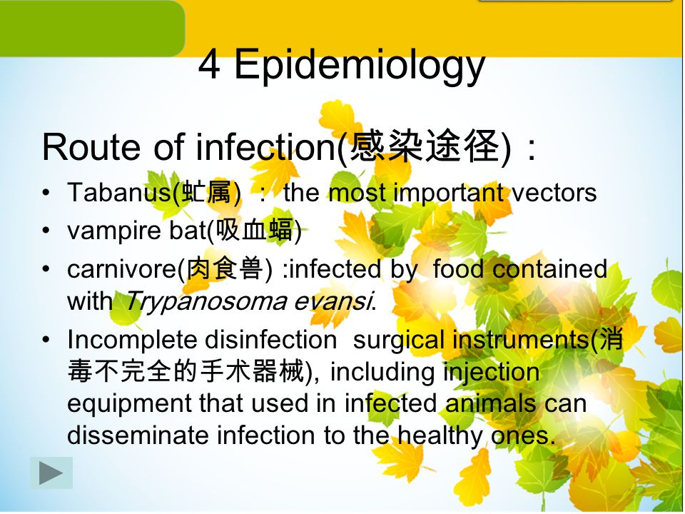 4 Epidemiology Route of infection( 感染途径 ) : Tabanus( 虻属 ) : the most important vectors vampire bat( 吸血蝠 ) carnivore( 肉食兽 ) :infected by food contained