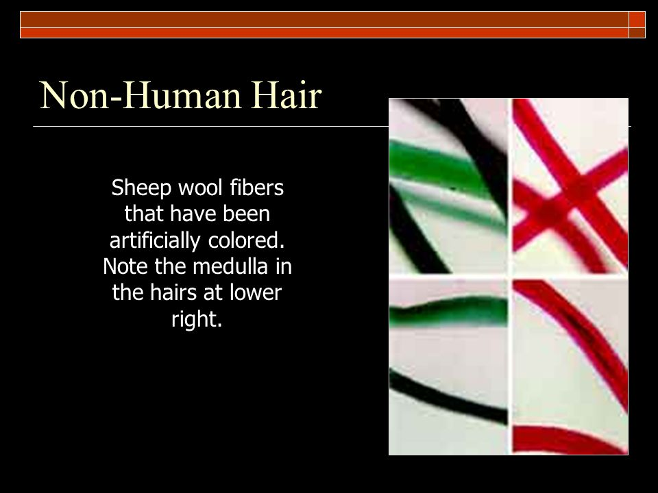 Non-Human Hair Sheep wool fibers that have been artificially colored.