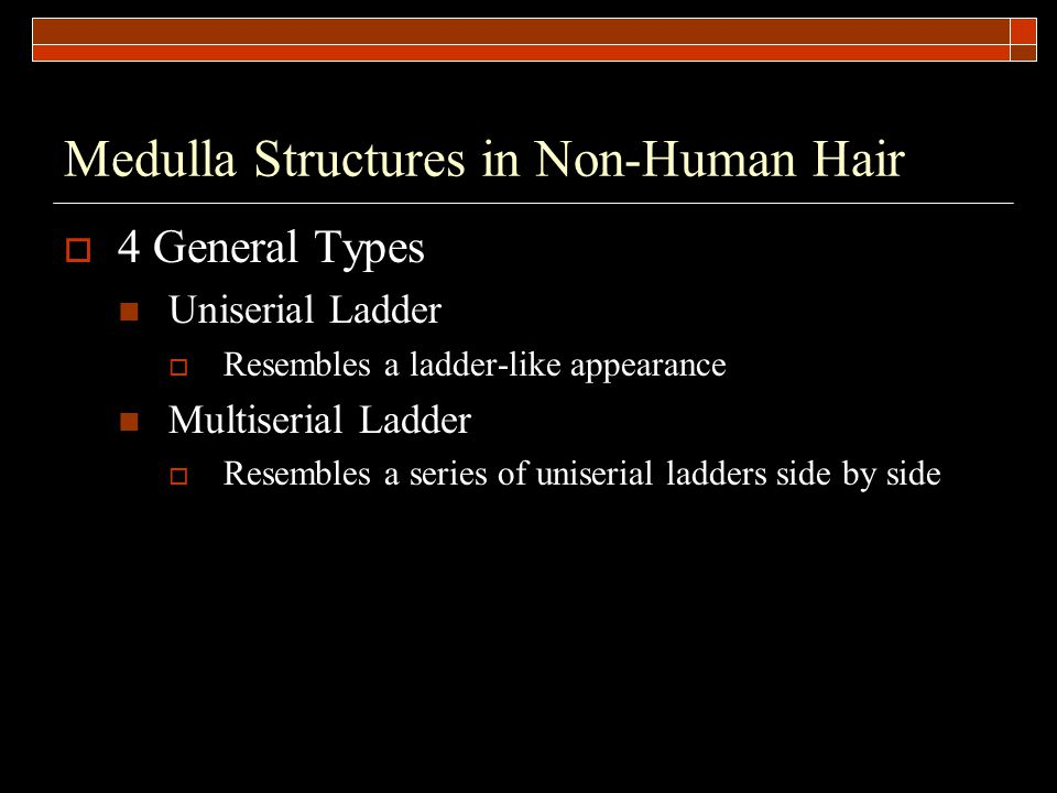 Medulla Structures in Non-Human Hair  4 General Types Uniserial Ladder  Resembles a ladder-like appearance Multiserial Ladder  Resembles a series of uniserial ladders side by side