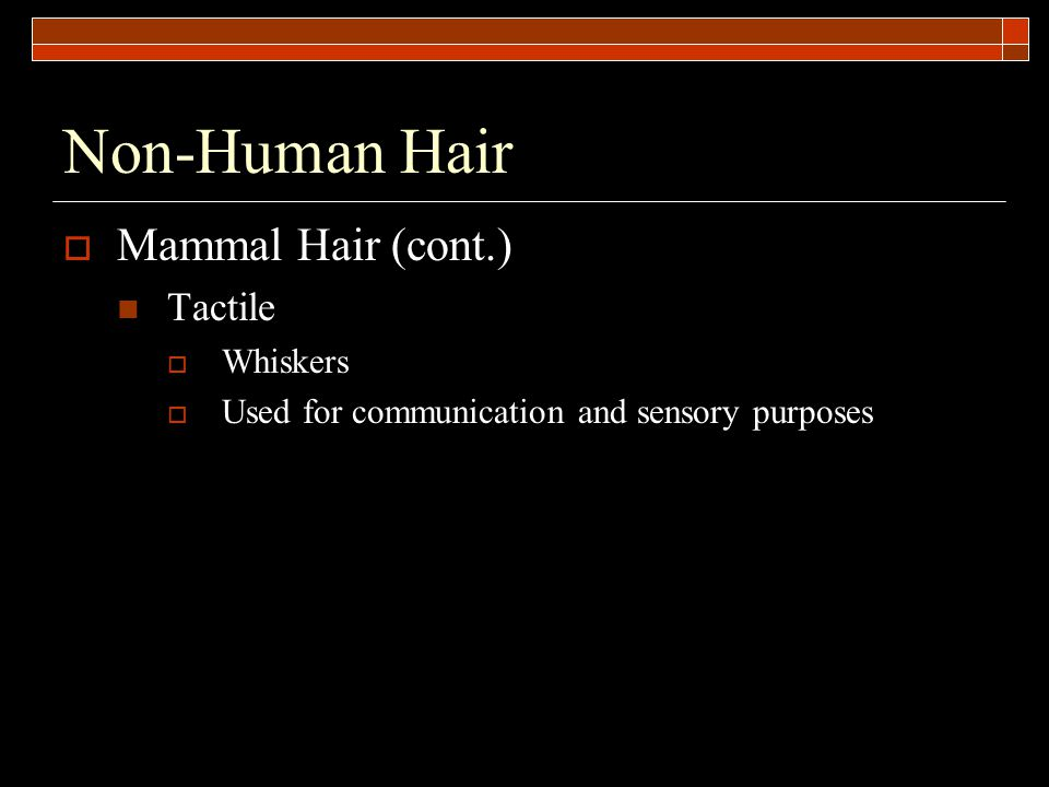Non-Human Hair  Mammal Hair (cont.) Tactile  Whiskers  Used for communication and sensory purposes