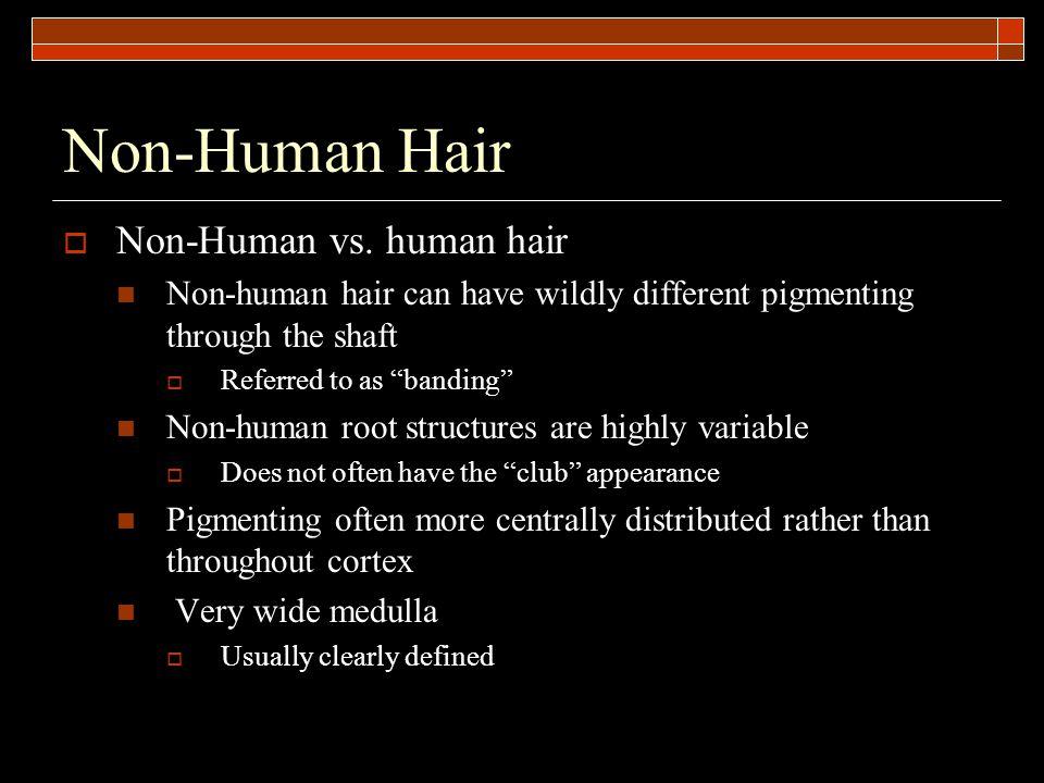 Non-Human Hair  Non-Human vs.