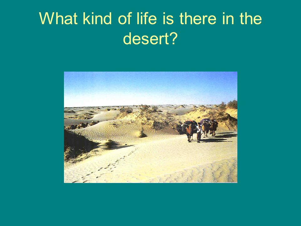 What kind of life is there in the desert?