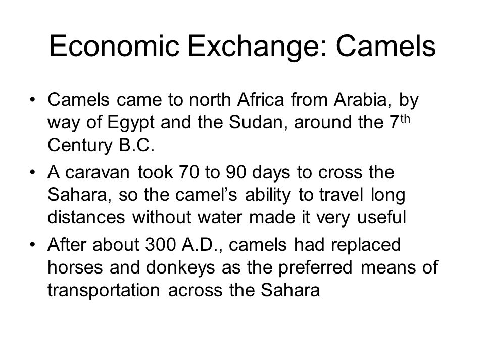 Economic Exchange: Camels Camels came to north Africa from Arabia, by way of Egypt and the Sudan, around the 7 th Century B.C.