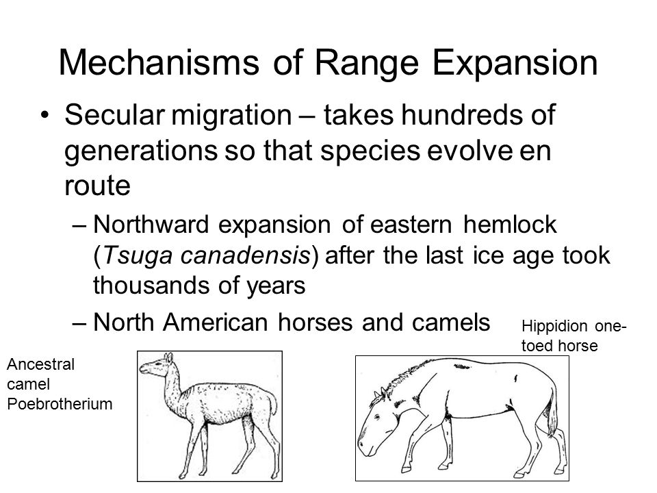 Secular migration – takes hundreds of generations so that species evolve en route –Northward expansion of eastern hemlock (Tsuga canadensis) after the