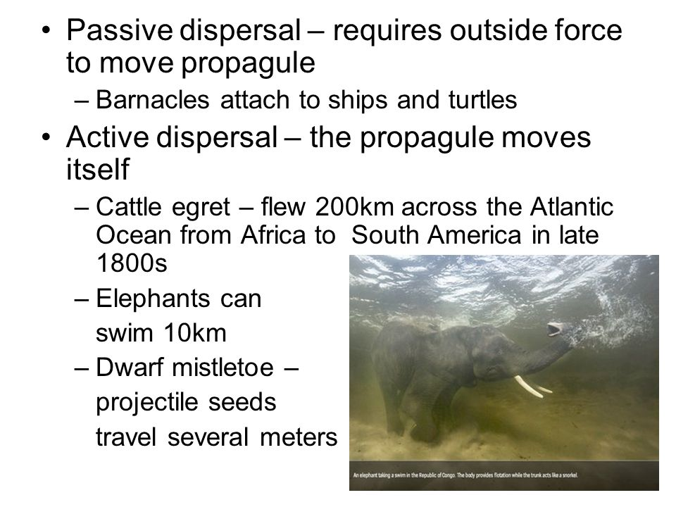 Passive dispersal – requires outside force to move propagule –Barnacles attach to ships and turtles Active dispersal – the propagule moves itself –Cat