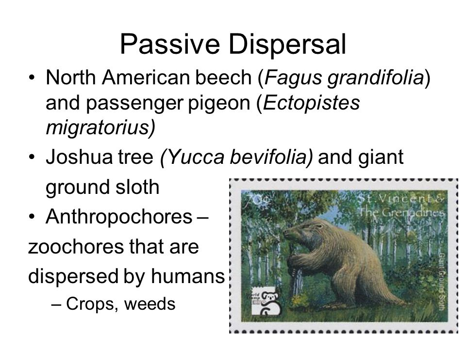 Passive Dispersal North American beech (Fagus grandifolia) and passenger pigeon (Ectopistes migratorius) Joshua tree (Yucca bevifolia) and giant groun