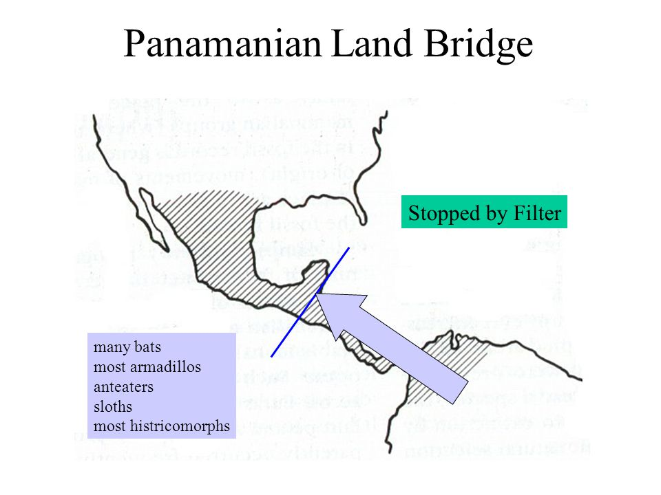 Panamanian Land Bridge many bats most armadillos anteaters sloths most histricomorphs Stopped by Filter