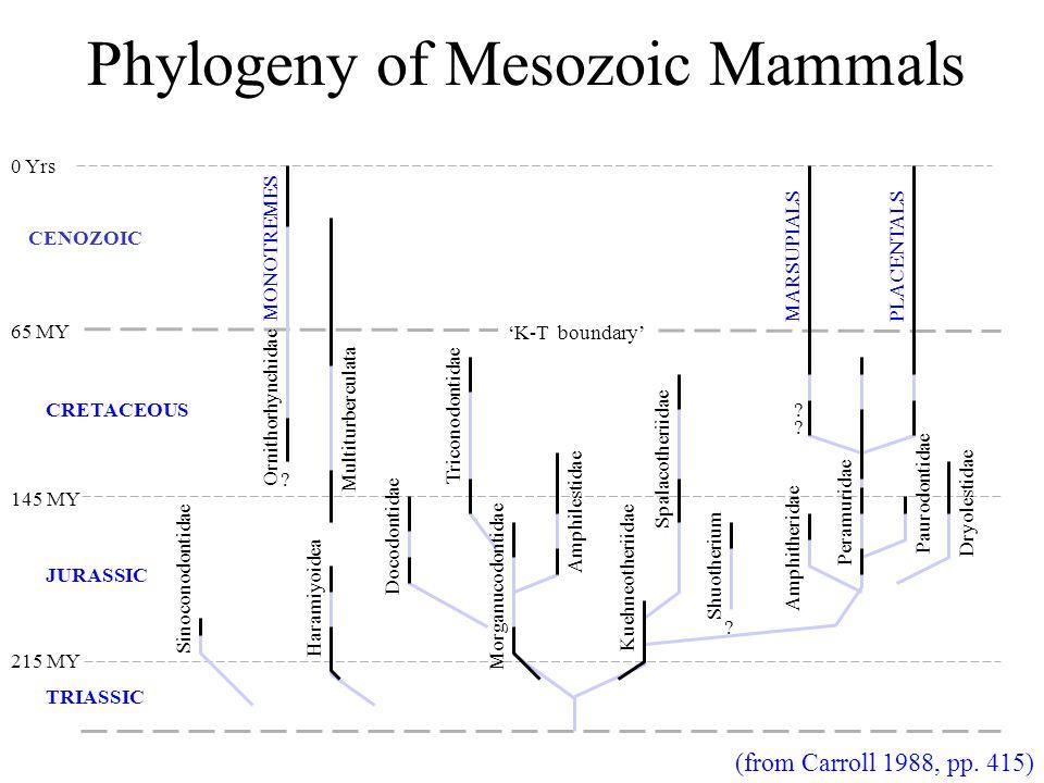 Phylogeny of Mesozoic Mammals .