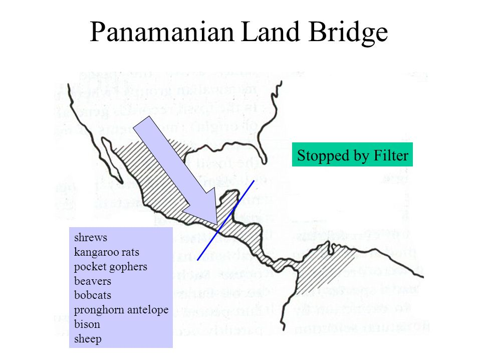Panamanian Land Bridge shrews kangaroo rats pocket gophers beavers bobcats pronghorn antelope bison sheep Stopped by Filter