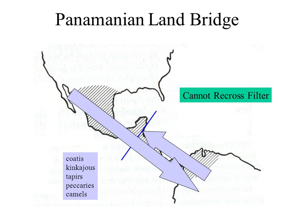 Panamanian Land Bridge coatis kinkajous tapirs peccaries camels Cannot Recross Filter
