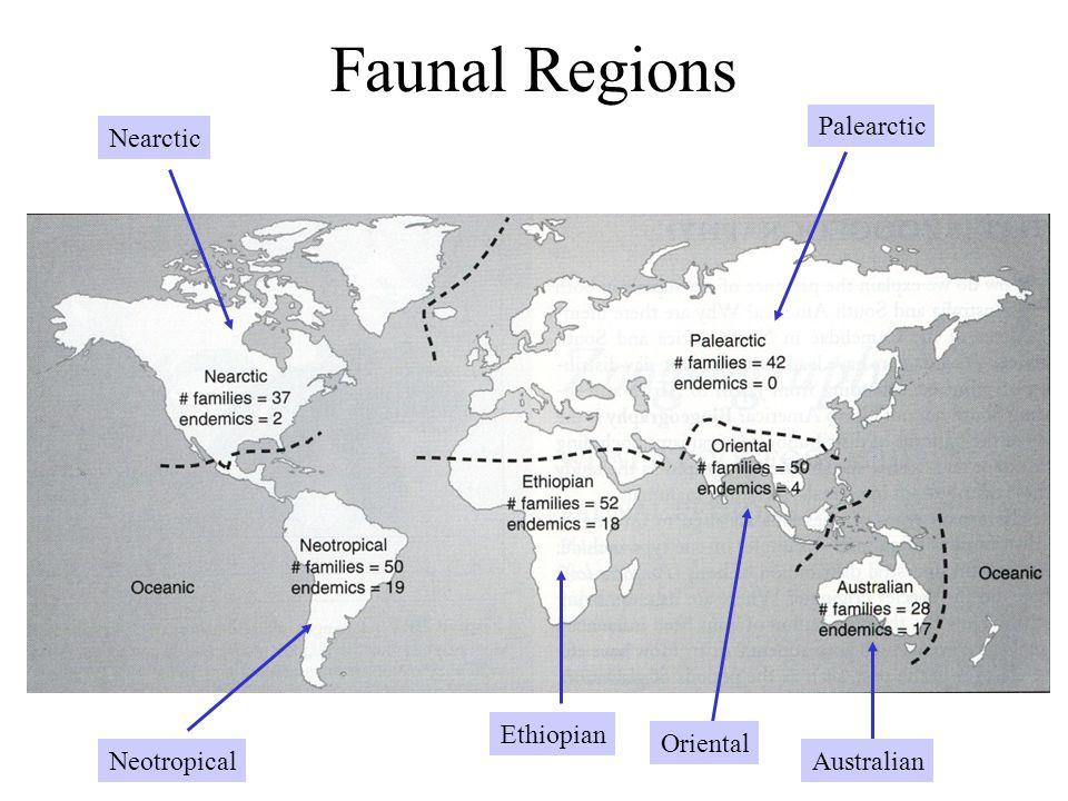 Faunal Regions Palearctic NearcticNeotropical Ethiopian Oriental Australian