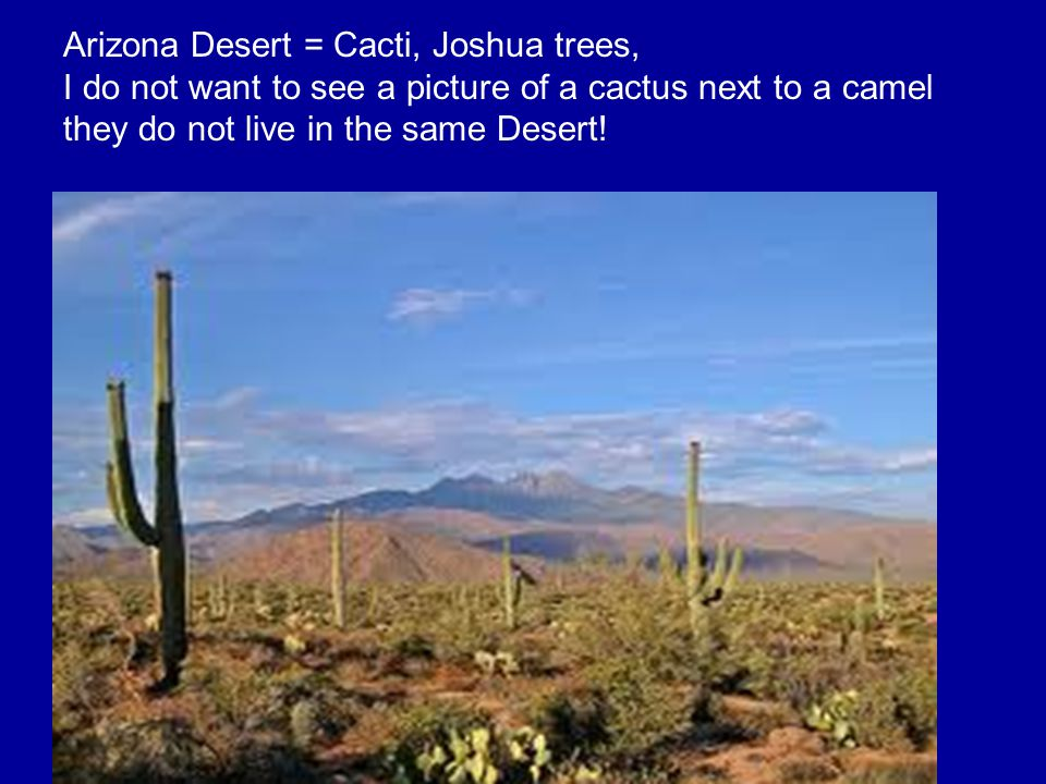 Arizona Desert = Cacti, Joshua trees, I do not want to see a picture of a cactus next to a camel they do not live in the same Desert!