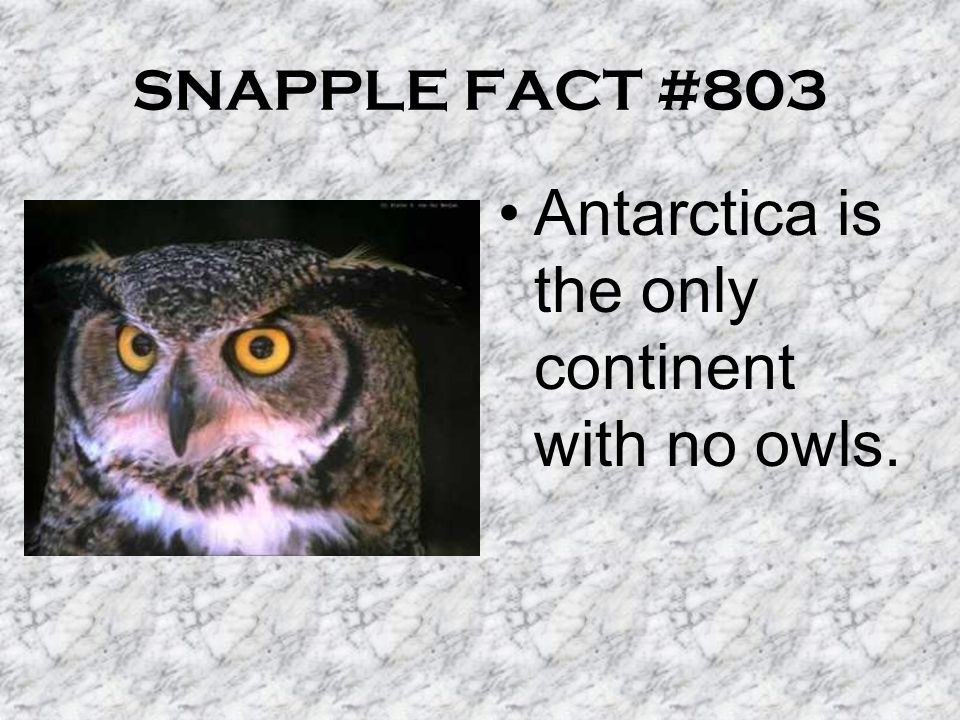 SNAPPLE FACT #803 Antarctica is the only continent with no owls.
