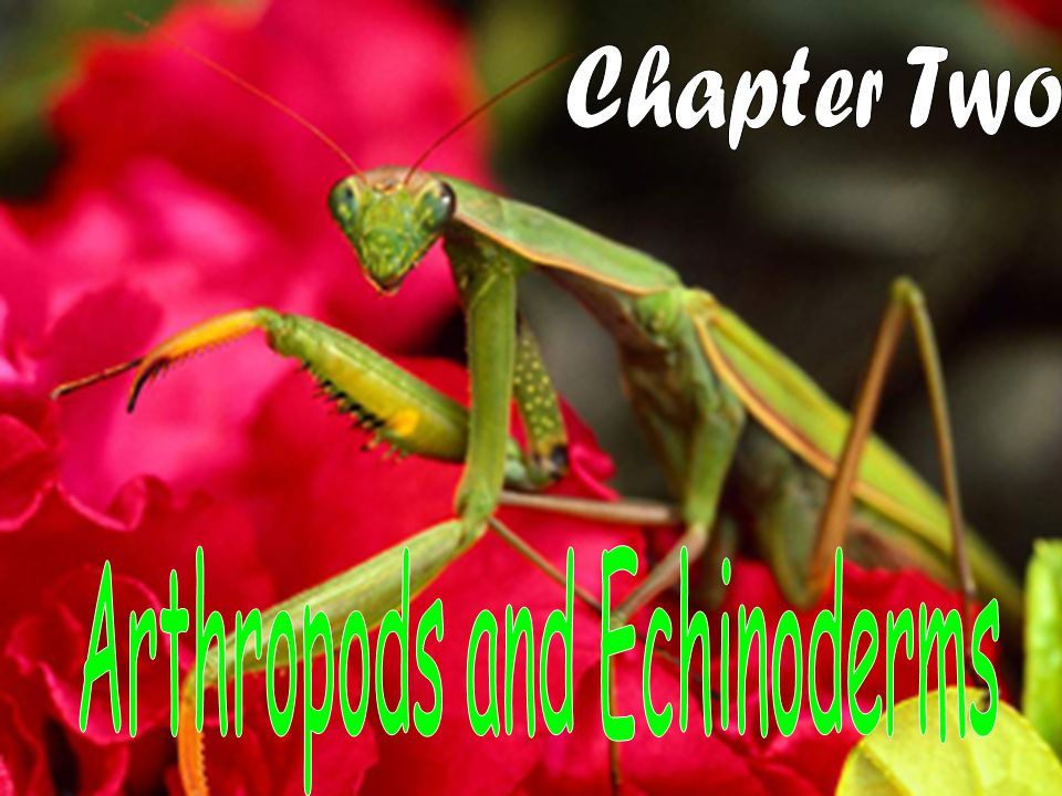 There are more than 1 million kinds of arthropods on Earth.