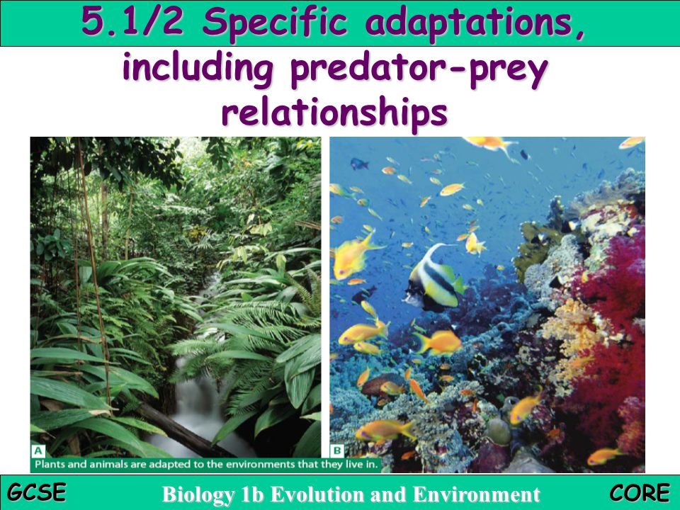 Biology 1b Evolution and Environment GCSE CORE 5.1/2 Specific adaptations, including predator-prey relationships