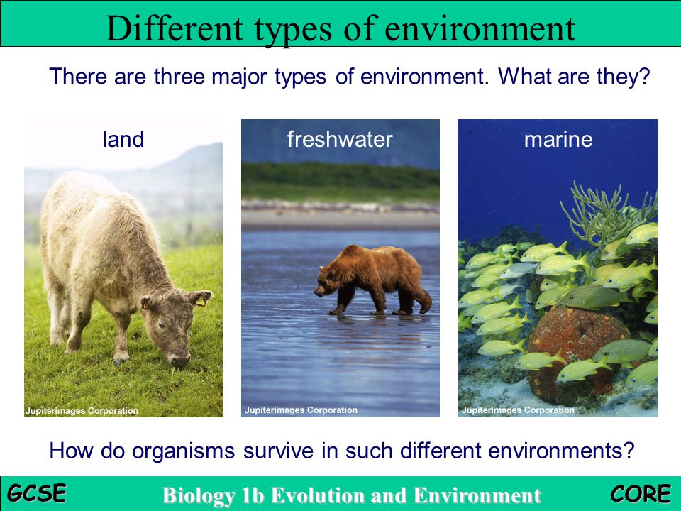 Biology 1b Evolution and Environment GCSE CORE There are three major types of environment. What are they? landfreshwatermarine How do organisms surviv