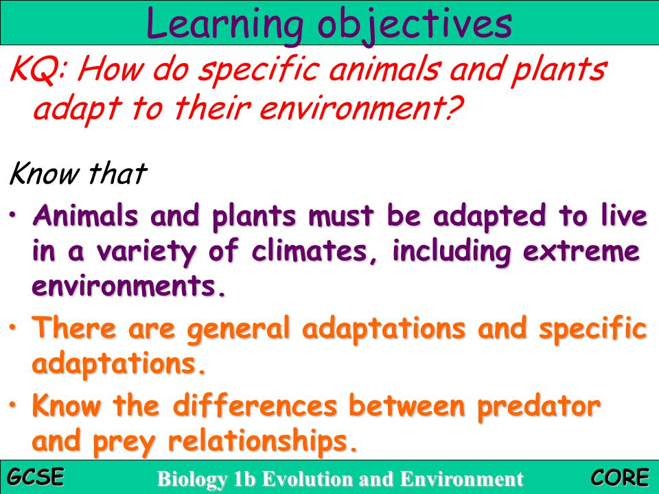 Biology 1b Evolution and Environment GCSE CORE Task 9: Let's pretend Some harmless organisms have become adapted to look like dangerous species.