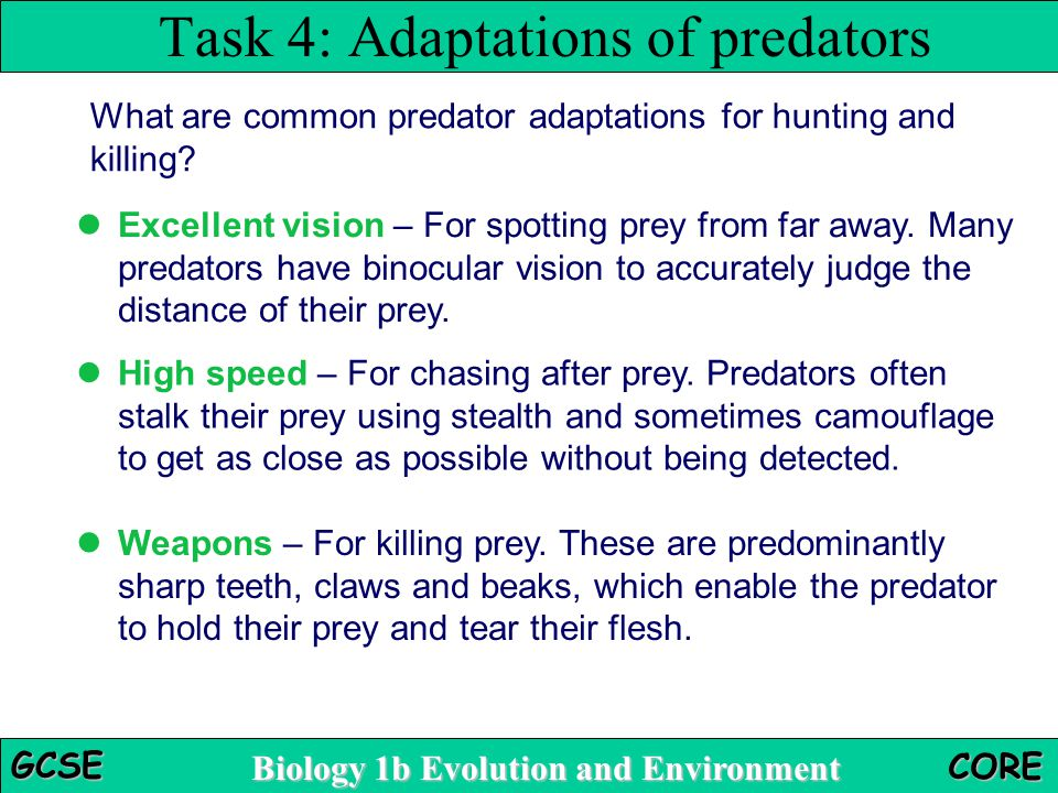 Biology 1b Evolution and Environment GCSE CORE Task 4: Adaptations of predators What are common predator adaptations for hunting and killing? Excellen