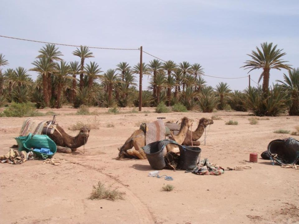 Day 5 (Thu): SAHARA DESERT / OULED DRISS / MARRAKECH This morning it's a final trek to the village of Ouled Driss, where you will bid farewell to our team of camels and the local Berbers, and head back overland to Marrakech (journey time approx.