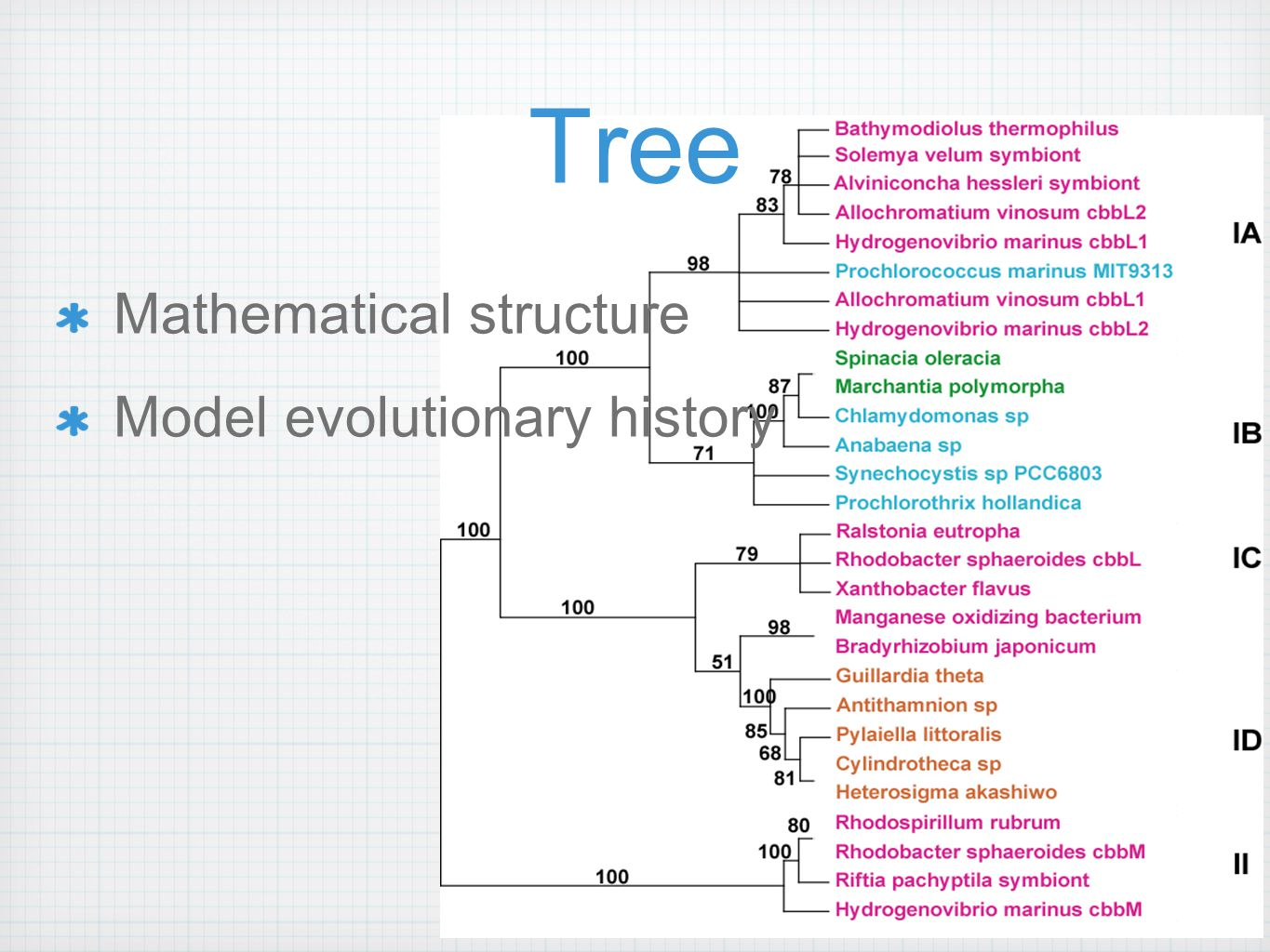 Tree Mathematical structure Model evolutionary history
